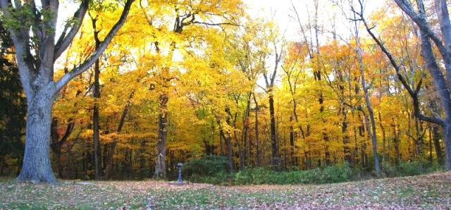 rừng thu hôm trước
