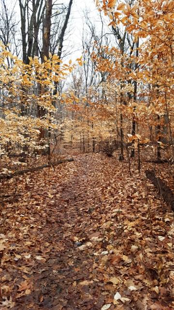 Đường rừng