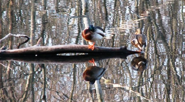hai con chim trên một gốc cây ở giữa hồ