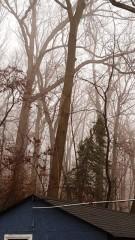 nóc shed và sương mù