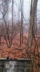 sương mù, buổi sáng, rừng sau nhà