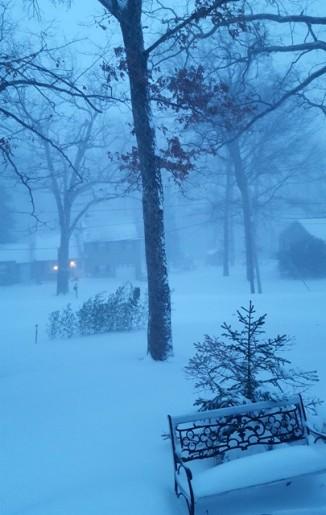 Bụi thông khóm trúc trong bão tuyết