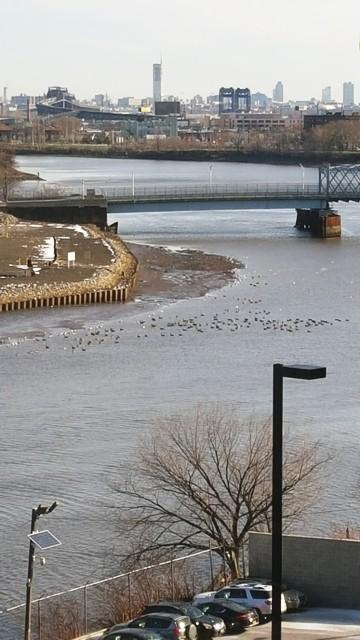 Đàn chim trên sông