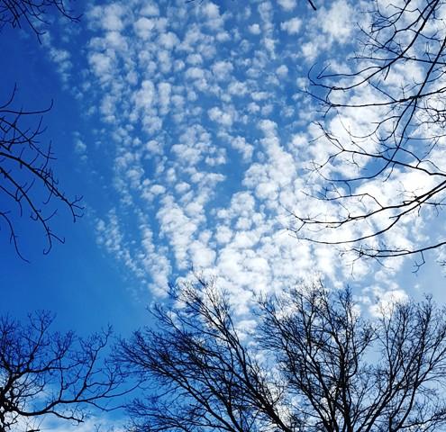 mây vảy trút