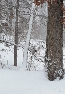 rừng đông tuyết phủ âm u