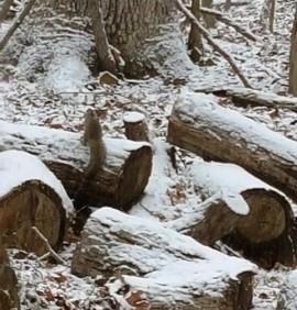 sóc ngồi trên gốc cây có tuyết