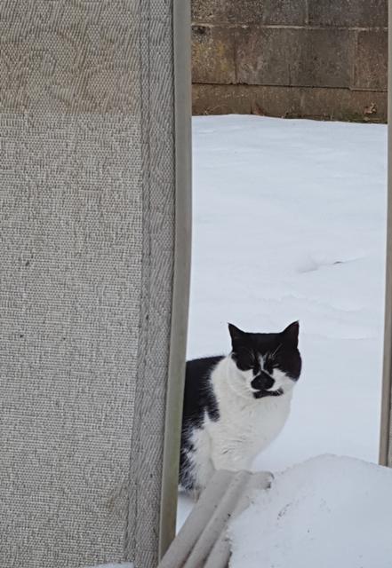 Boyfriend trên tuyết