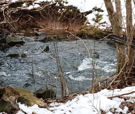 con suối tuyết tan nước chảy xiết