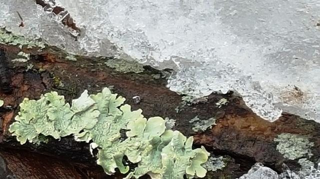 nấm trên khúc gỗ mục chìm trong tuyết