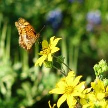 bướm vàng hoa vàng
