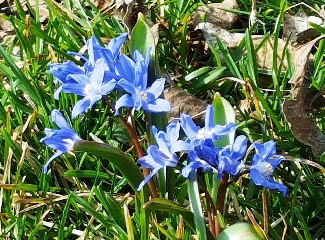 hoa mọc trên bãi cỏ ở thư viện