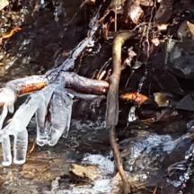 nước suối đóng thành băng trên rễ cây