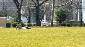 nằm trên sân cỏ.