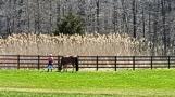 Người chăn và con ngựa ở hàng rào của trại nuôi ngựa Watchung Stable