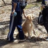 Hôm ấy có lẽ vì trời ấm nắng đẹp nên có rất nhiều người dẫn chó đi rừng để dạy chó biết nghe lời chủ. Bình thường người ta cũng hay dẫn chó đi dạo cho chúng được vận động mà bớt béo phì đi. Tôi gặp rất nhiều chó rất béo.