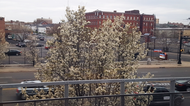 hoa đào nhìn thấy ở cửa sổ xe lửa buổi sáng sớm