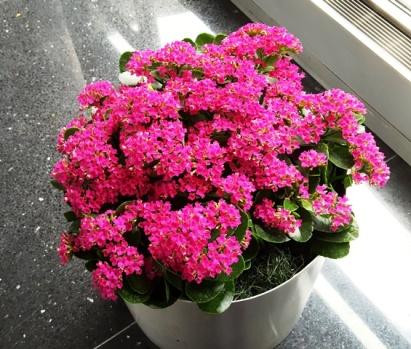 hoa đỏ chưng trong concourse