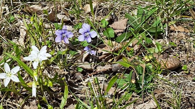 hoa dại sân sau nhà