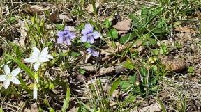 sân sau nhà tôi trơ trụi thế mà cỏ dại cũng nở hoa