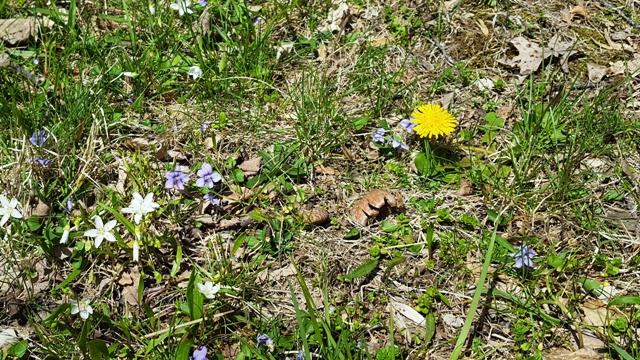 khoảng sân sau nhà tôi trơ trụi thế mà cũng có hoa