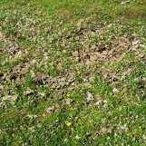 Một bãi cỏ chi chít hoa màu trắng. Hoa nhỏ quá nên chỉ thấy cỏ xanh lá xanh thôi.