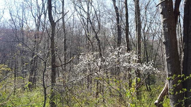 một cây hoa trắng nở lẻ loi ở giữa rừng