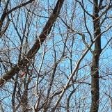 Nếu nhìn kỹ bạn sẽ thấy có một con chim cardinal màu đỏ