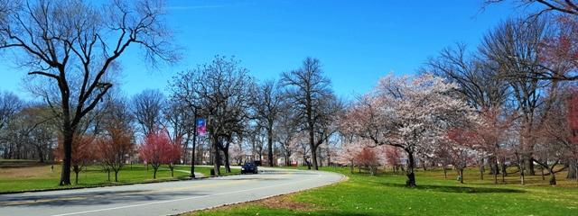một góc trong công viên Branch Brook