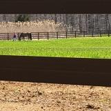 Con ngựa mà anh nài qua khe hở hàng rào