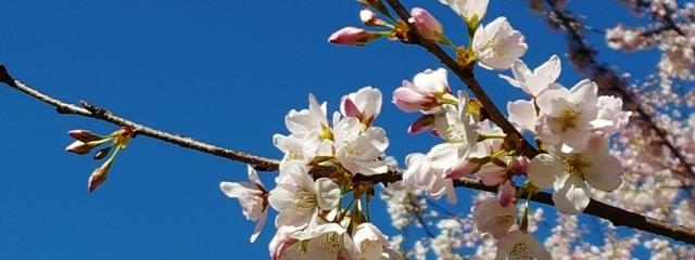 nhánh hoa