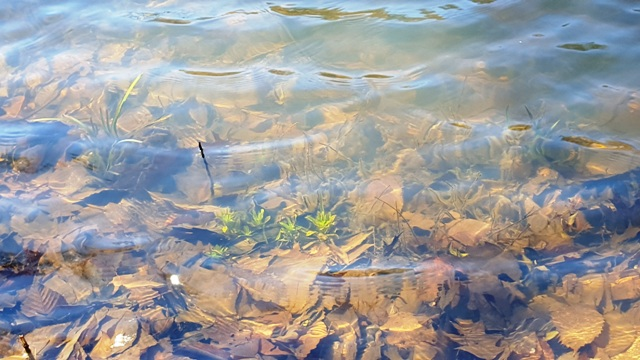 những loại cỏ rong dưới hồ bắt đầu sống lại