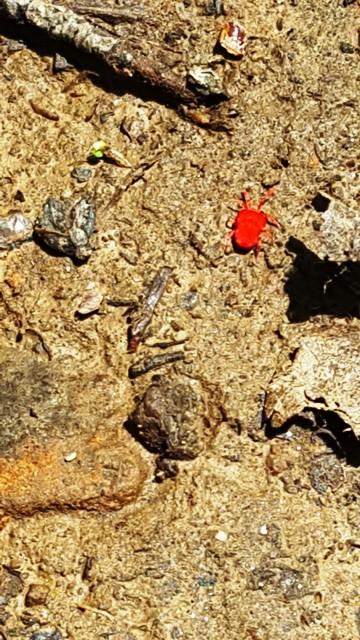 bọ đỏ chạy rất nhanh