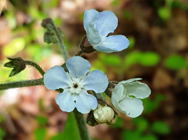 cành hoa be bé xinh xinh