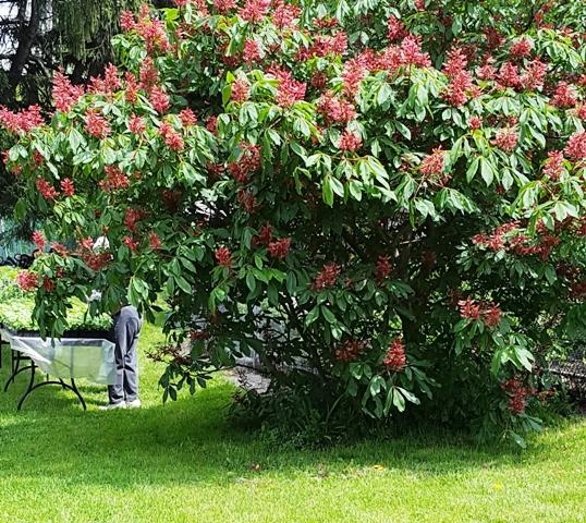 cây gì không biết tên trổ hoa trong nursery của nature center
