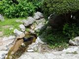 Chú quạ tắm mát trong dòng suối