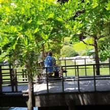 du khách ngồi trong nhà thủy tạ dưới dàn hoa