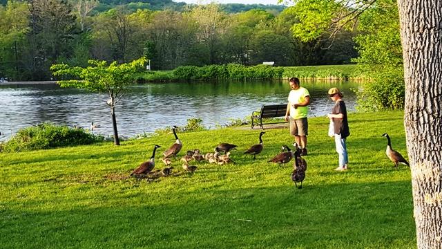 hai vợ chồng cho ngỗng ăn bên hồ Watchung