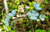 hoa màu xanh nhạt