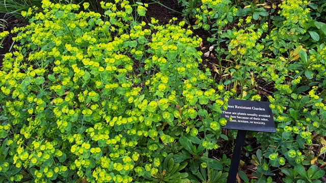 loại cây chống nai vì trong lá có chất độc hay không ngon với nai