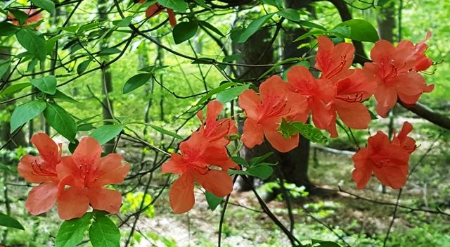 màu hoa tươi thắm