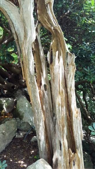 """Cái cây khô mục này lại có tầm quan trọng rất lớn trong công cuộc xây dựng vườn trà Nhật. Ông Taniguchi đã gọi cây này """"Mother Tree"""" nghĩa là mẹ của tất cả loại cây trong vườn. Ông Taniguchi đã nương tựa vào tinh thần của mẹ cây trong suốt quá trình xây dựng vườn. Ông cho là Mẹ Cây đã trò chuyện với ông hằng ngày, động viên ông, và nhờ đó ông mới hoàn tất công trình kiến trúc này."""