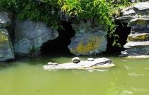 năm con rùa phơi nắng