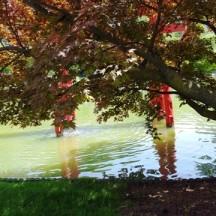 torii bị cây che khuất