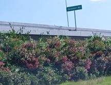 trúc đào dọc theo đường Beltway 8
