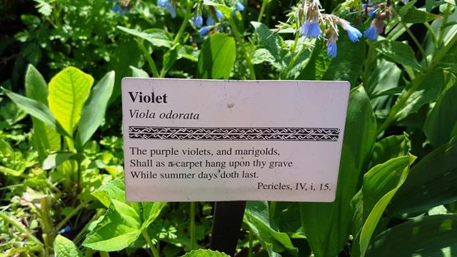 Những đóa hoa violet màu tím, và vạn thọ. Sẽ trở thành tấm thảm treo trên mộ của người, khi những ngày ấm áp của mùa hè còn vương vương.