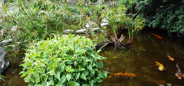 đường đá khuất sau cỏ u ru