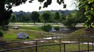 đoàn xe đạp đi ngang công viên buổi sáng
