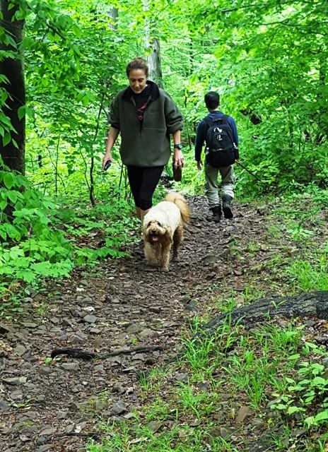 cô chủ và con chó đi rừng