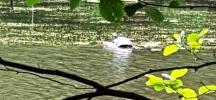 Một con rùa nằm giữa hồ khá xa nên chụp ảnh không rõ. Trước đó tôi thấy con rùa rất to nằm trên tảng đá gần bờ. Tôi đến gần thì nó phóng vụt xuống nước thật là nhanh. Thế mà ai cũng bảo là chậm như rùa.