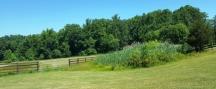 Một góc trại nuôi ngựa Watchung